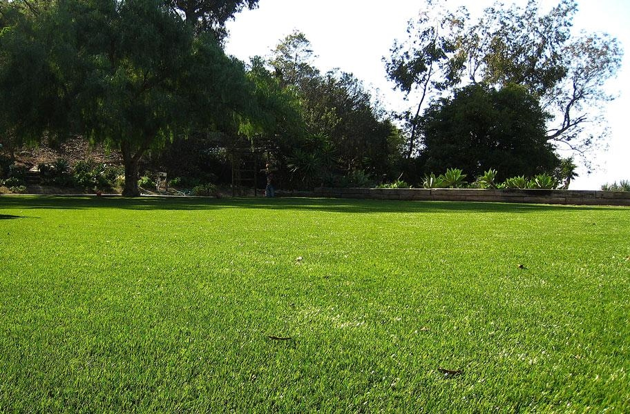 Artificial Grass Myth 5: Newport Premium Turf Rolls